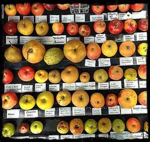 Wisconsin Nurseries by Mountain Nursery Apples And Nurseries On Pinterest