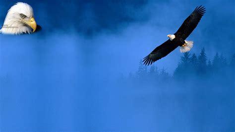 eagles background my background eagle backgrounds
