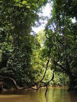 Paya Hijau tumbuhan semula jadi dan hidupan liar hutan paya air tawar