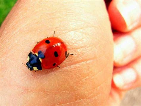 ladybug ladybug fly away home a photo on flickriver