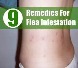 flea infestations