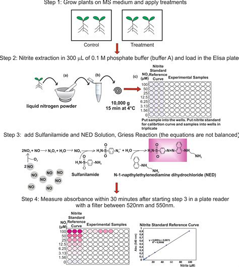 Detection of Nitric Oxide and Determination of Nitrite ...