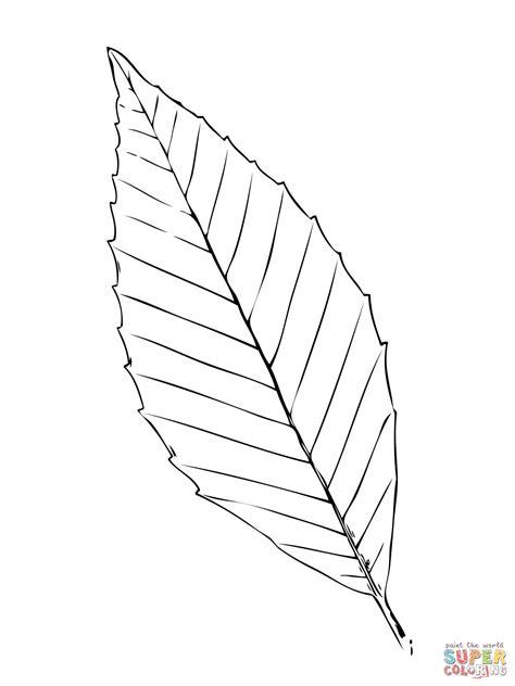 hickory leaf coloring page ausmalbild blatt einer buche ausmalbilder kostenlos zum