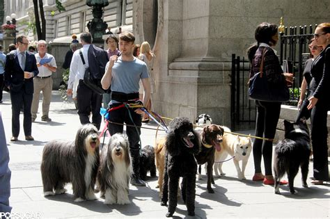 daniel radcliffe dogs daniel radcliffe with dogs on the set of trainwreck popsugar
