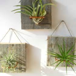 air plant wall holder set of three small form air plant and barn wood grab by niacraft