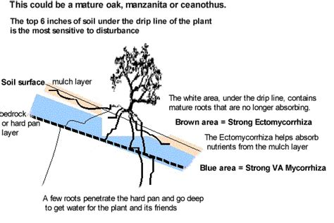 roots of style do you live in a minimalist traditional house california oak trees and mycorrhiza