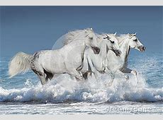 Horses In Water Stock Photo - Image: 65045795 Horse Background Clipart