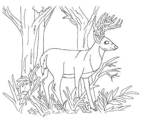 imagenes para colorear venado ciervos dibujos para imprimir colorear o pintar para