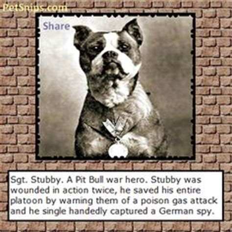 Sgt Stubby Pitbull After Returning Home Stubby Became A And Marched In And Normally Led Many Parades