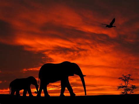 Home Decor Blogs In Kenya by Mother And Baby Elephants Sunset Silhouette Series