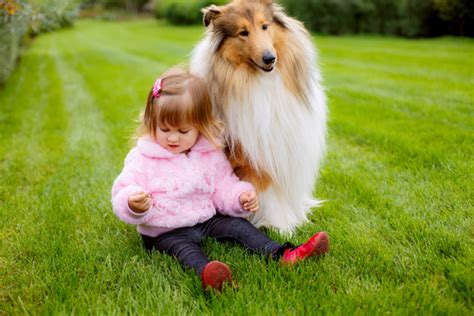 best kid friendly dogs top 9 best family friendly guard dogs in my area