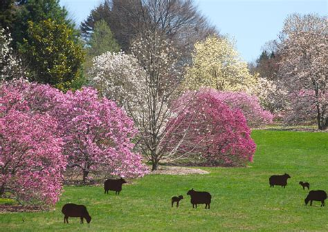 Magnolia Garden by Morris Arboretum Of The Of Pennsylvania Explore
