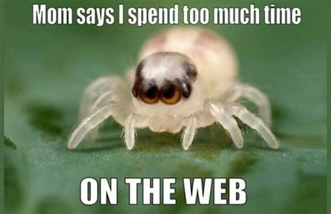 Cute Spider Memes - 15 funny cute photos and images