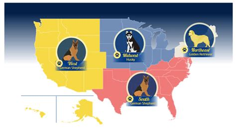 most popular breeds in the us most popular breeds in the united states by region