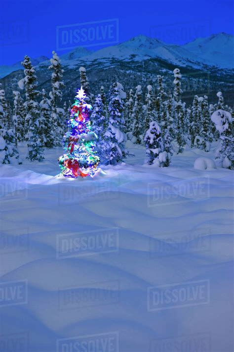 piper mountain christmas tree farm for sale tree with multicolored lights standing on snow covered tundra at twilight chugach
