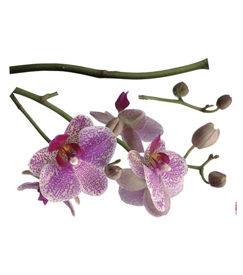 orchid wall stickers komar orchids wall decal 3 set jo