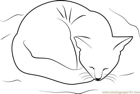sleeping kitten coloring page cat sleeping on her bed coloring page free cat coloring