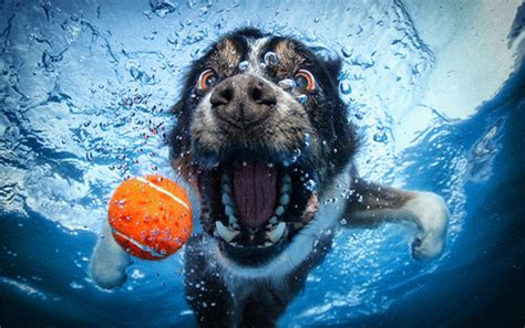 dogs water underwater photos of dogs fetching a you re