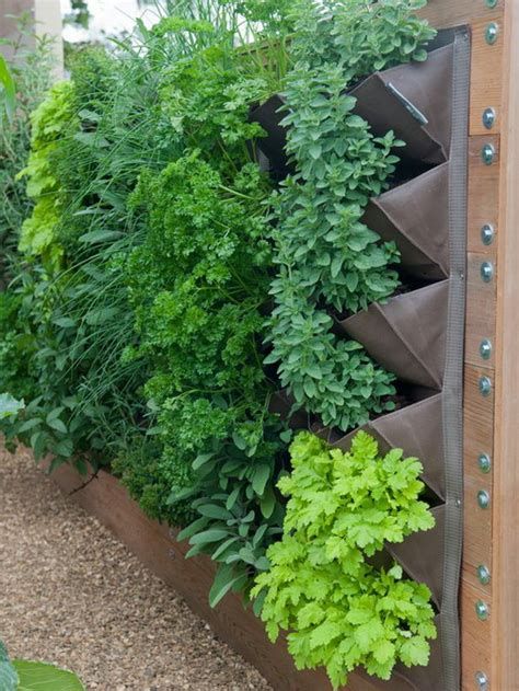 Vertical Garden Lettuce by Vertical Vegetable Gardening Gardening Ideas