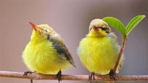 wallpaper cute bird cute baby birds weneedfun