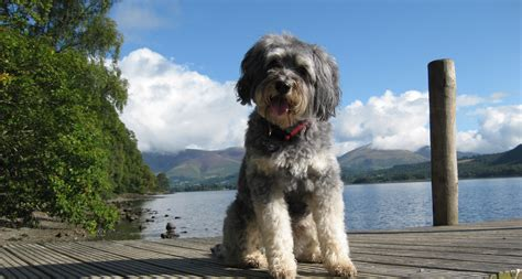 district dogs friendly hotels lake district friendly accommodation