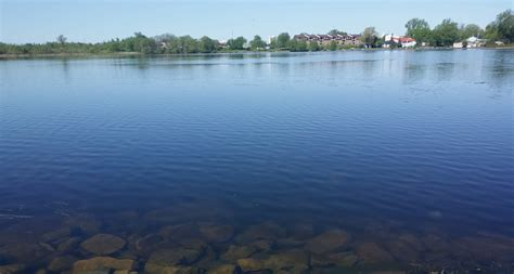 pond water www pixshark com images galleries with a bite