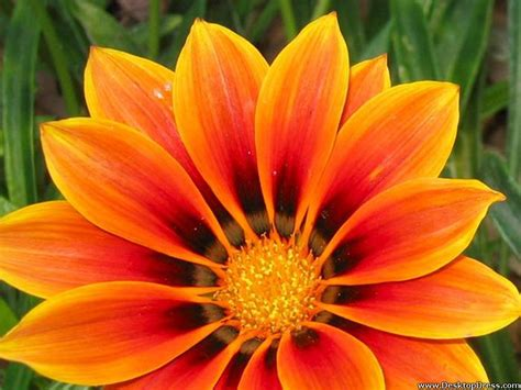 pretty orange desktop wallpapers 187 flowers backgrounds 187 beautiful