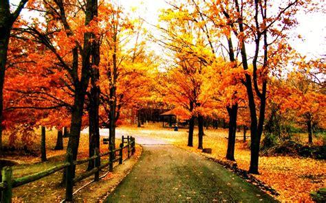 pretty trees beautiful autumn trees wallpapers http refreshrose