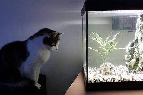 long  aquarium lights  left