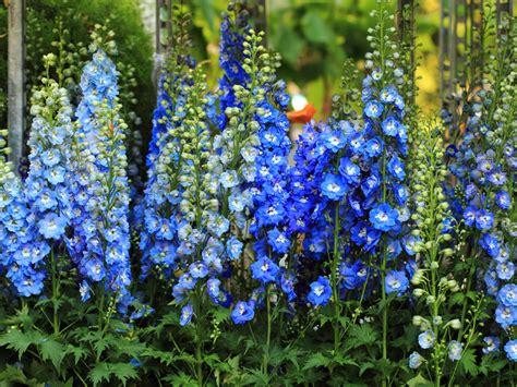 Garden Saga by Blue Flowers For Your Garden Saga