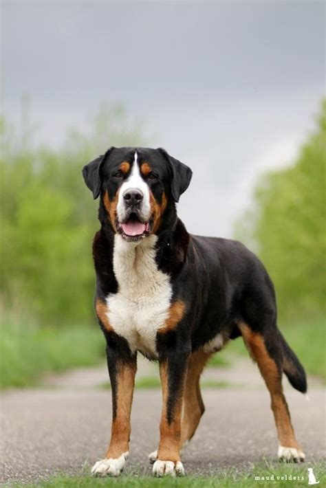 strongest breed worlds strongest breed