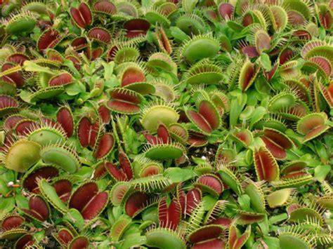 tropical rainforest carnivorous plants carnivorous plants