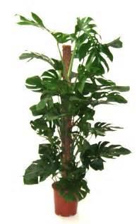 ondoor plants indoor plants 171 desertfragrance com