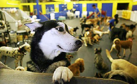 day care miami doggie daycare problems part 2