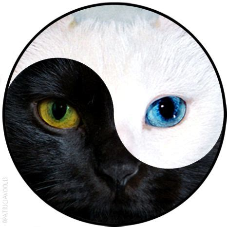cat yin yang tattoo yin yang cat edition patriciavool13 tattoos and