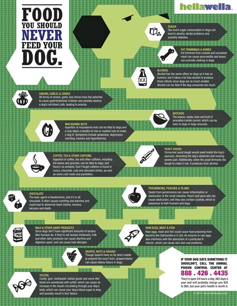 foods not to feed dogs what not to feed your food infographics