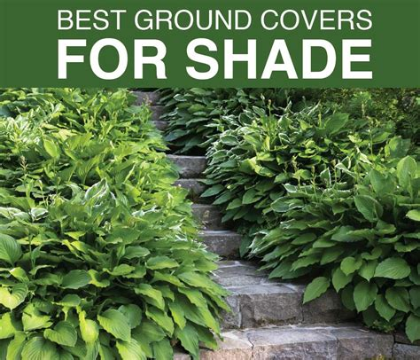best ground best ground covers for shady gardens longfield gardens