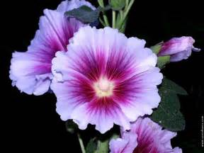beautiful flower pictures beautiful flower pictures great inspire