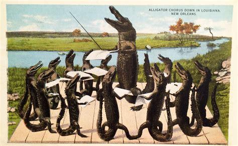 Lousiana Black Cardi vintage postcard alligator chorus naturetime