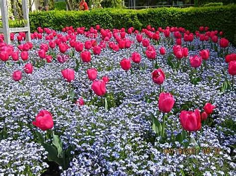 images  flower garden pictures  pinterest