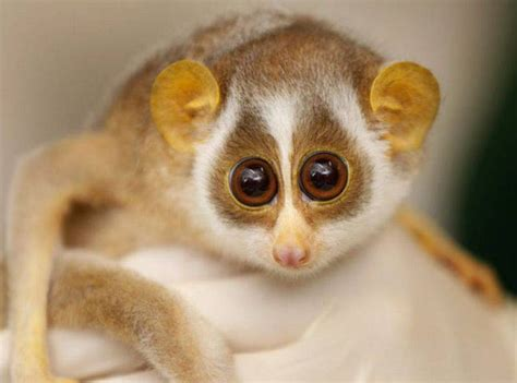 exotic animals 10 cutest most cuddly exotic pets