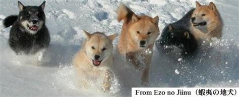 Pics For > Ainu Dog