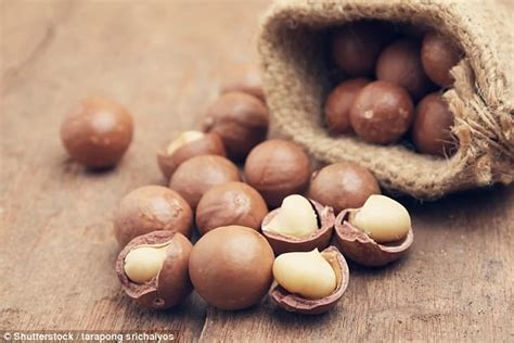 can dogs eat macadamia nuts the 12 things you should never let your eat wstale