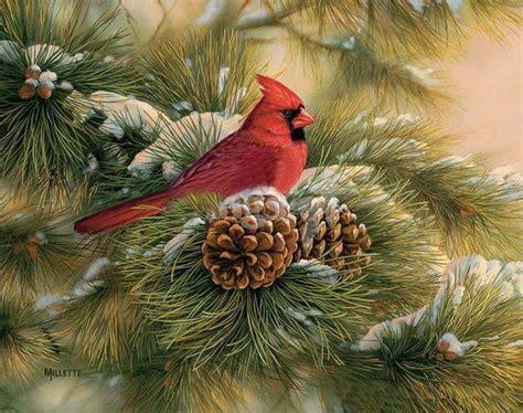 Attractive Cardinal Christmas Cards #2: Dfdcbf4af17bdf9427646fdfad0a30a6.jpg