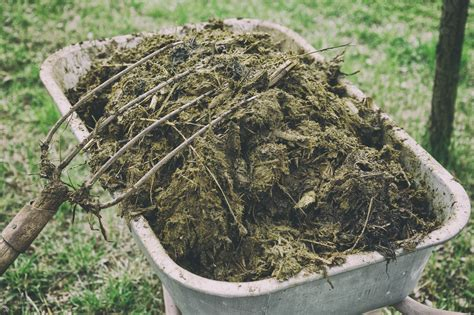 Manure For Garden by Different Types Of Animal Manure Pros And Cons Of Using