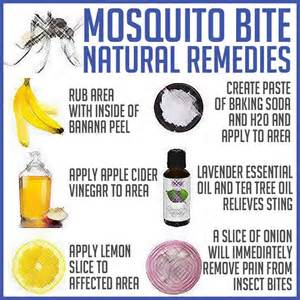 home remedies for mosquito bites mosquito bite remedies great ideas