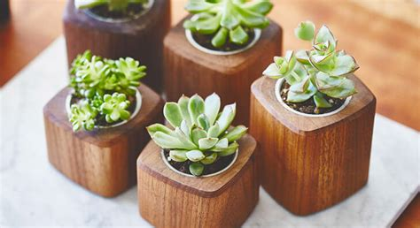 Small Plants For Office Desk Ways To Personalise Office Desk The Royale