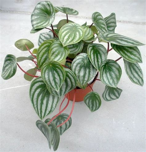 easy care indoor plants easy care plants for the home pinterest