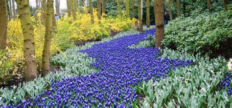 A Touch Of Blue Bulbs For A Blue Flower Garden Garden Blue Garden Flowers