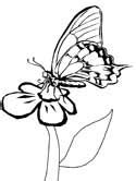 butterfly coloring pages dltk butterfly coloring pages page 2